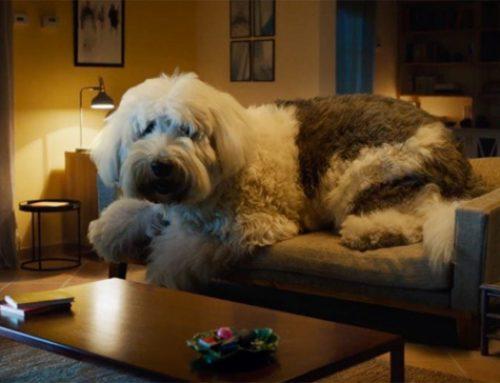 El perro de una tonelada de Skoda: seguridad vial sin dramas